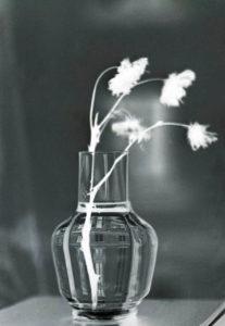 Rosen i vasen ©Georg Kristiansen