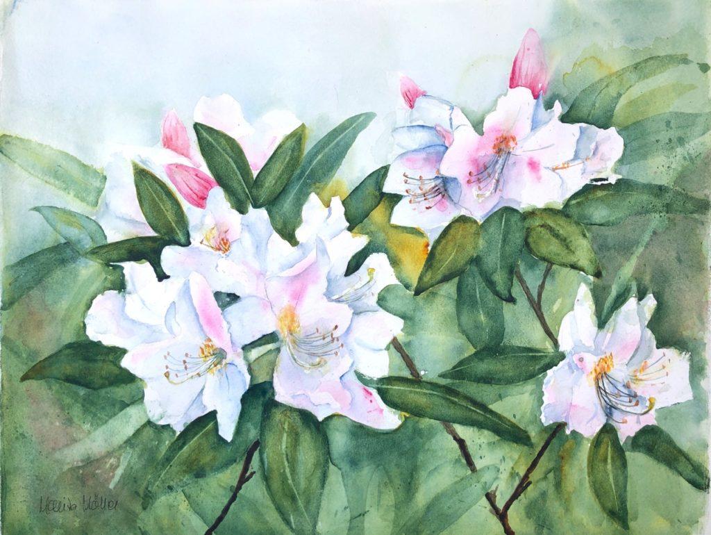 Rhododendron ©Marita Möller